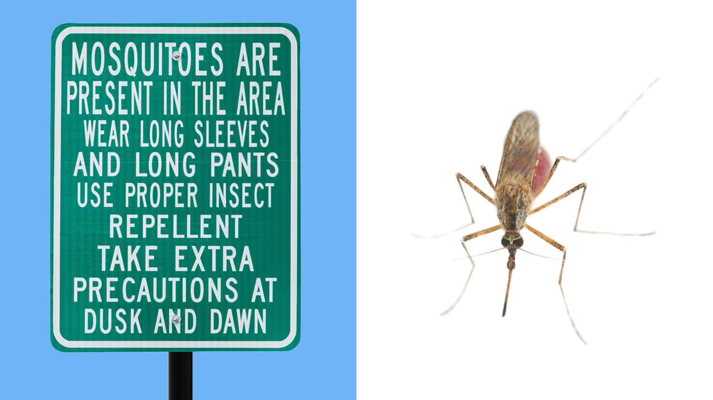 Mosquito warning sign and mosquito